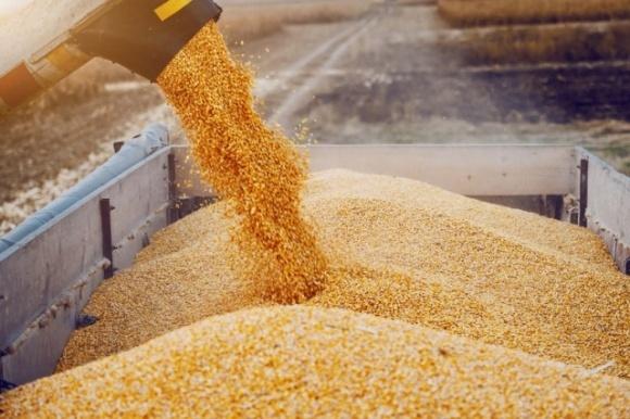 Итоги жатвы основных сельхозкультур в Украине