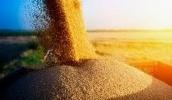 В Украине подписали Меморандум о предельных объемах экспорта пшеницы на 2020/21 маркетинговый год