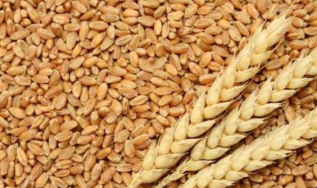 Украина уже экспортировала 15 миллионов тонн зерна